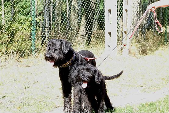 Max & Gustaw 9