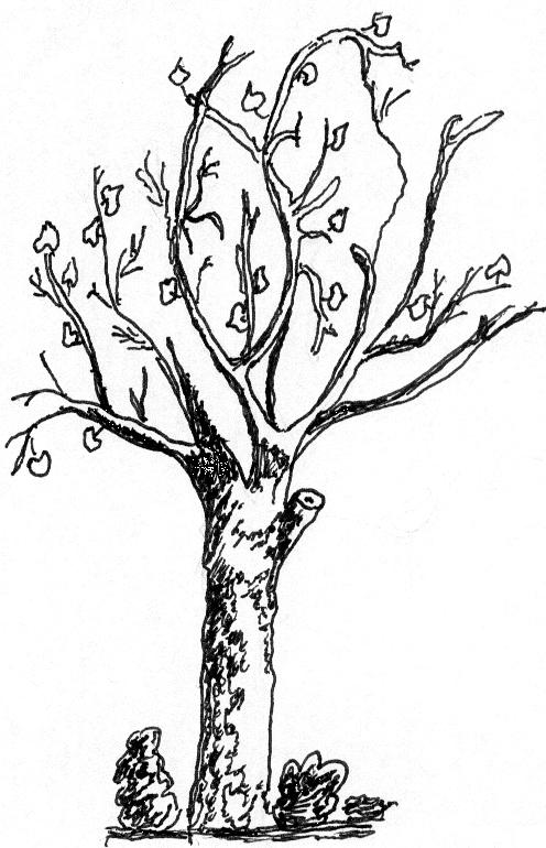 Niesforny liść - wiersz - Maria Tomas, wiersze i opowiadania.